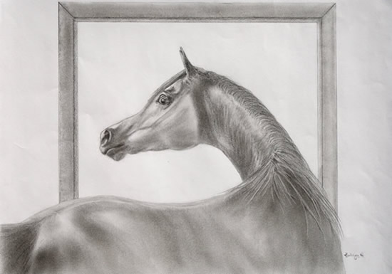 Pencil Drawing by Kathryn