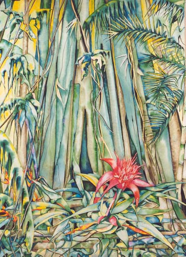 Rainforest Binna Burra by Giselle